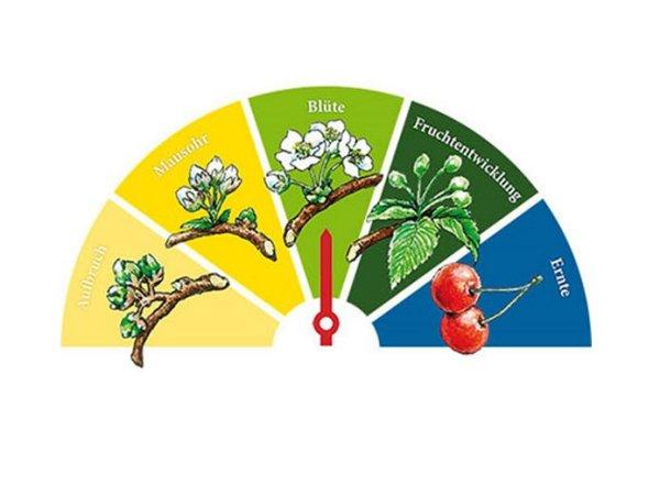 Blütenbarometer Fränkische Schweiz - Wann blüht die Kirsche?