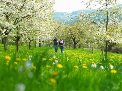 Der größte Kirschgarten Deutschlands